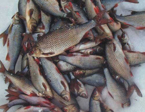 Какая рыба водится вАстраханской области