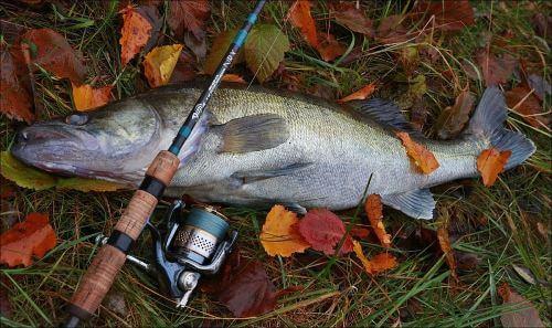 Какая рыба водится вБрянской области