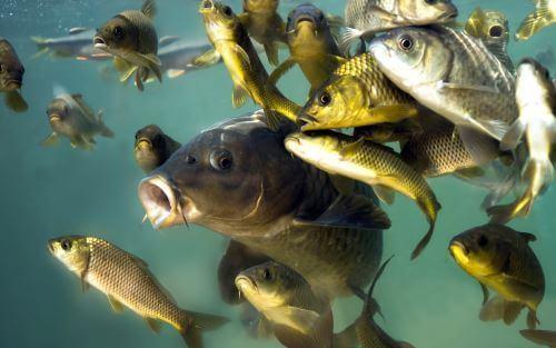 Какая рыба водится в Иркутске