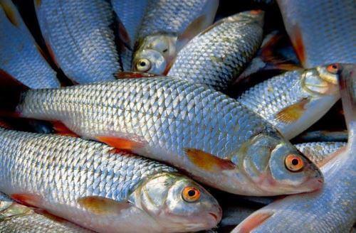 Какая рыба водится в Жуковском