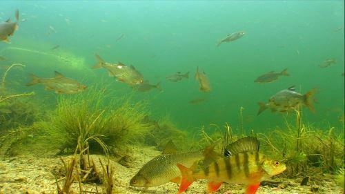 Какая рыба водится в Новосибирской области