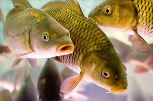 Какая рыба водится в Омской области