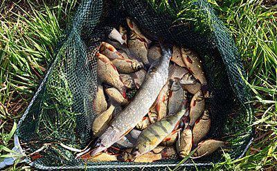 Рыбалка в Тамбове на реках