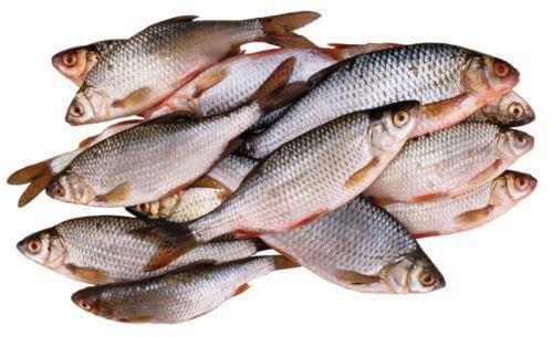 Какая рыба водится в Томской области