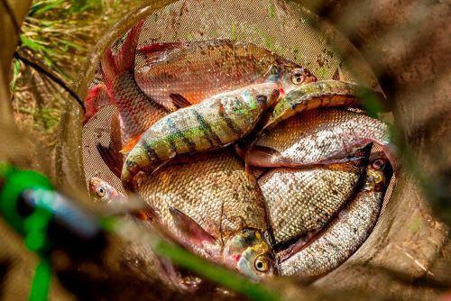 Какая рыба водится в Тюменской области