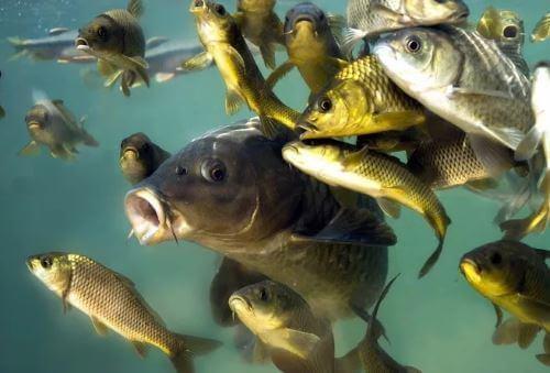 Какая рыба водится вВолгоградской области