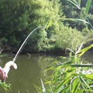 Видео о ловле сазана донкой