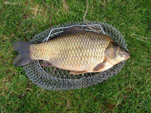 Техника и тактика поплавочной рыбалки на карася