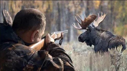 Куда лучше стрелять лося