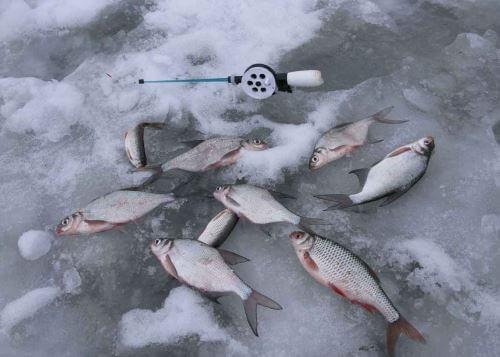 Зимняя рыбалка весной
