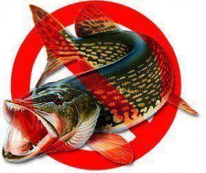 Сезонные запреты на рыбалку в Кемеровской области и Кемерово