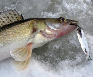Блесны для ловли судака зимой
